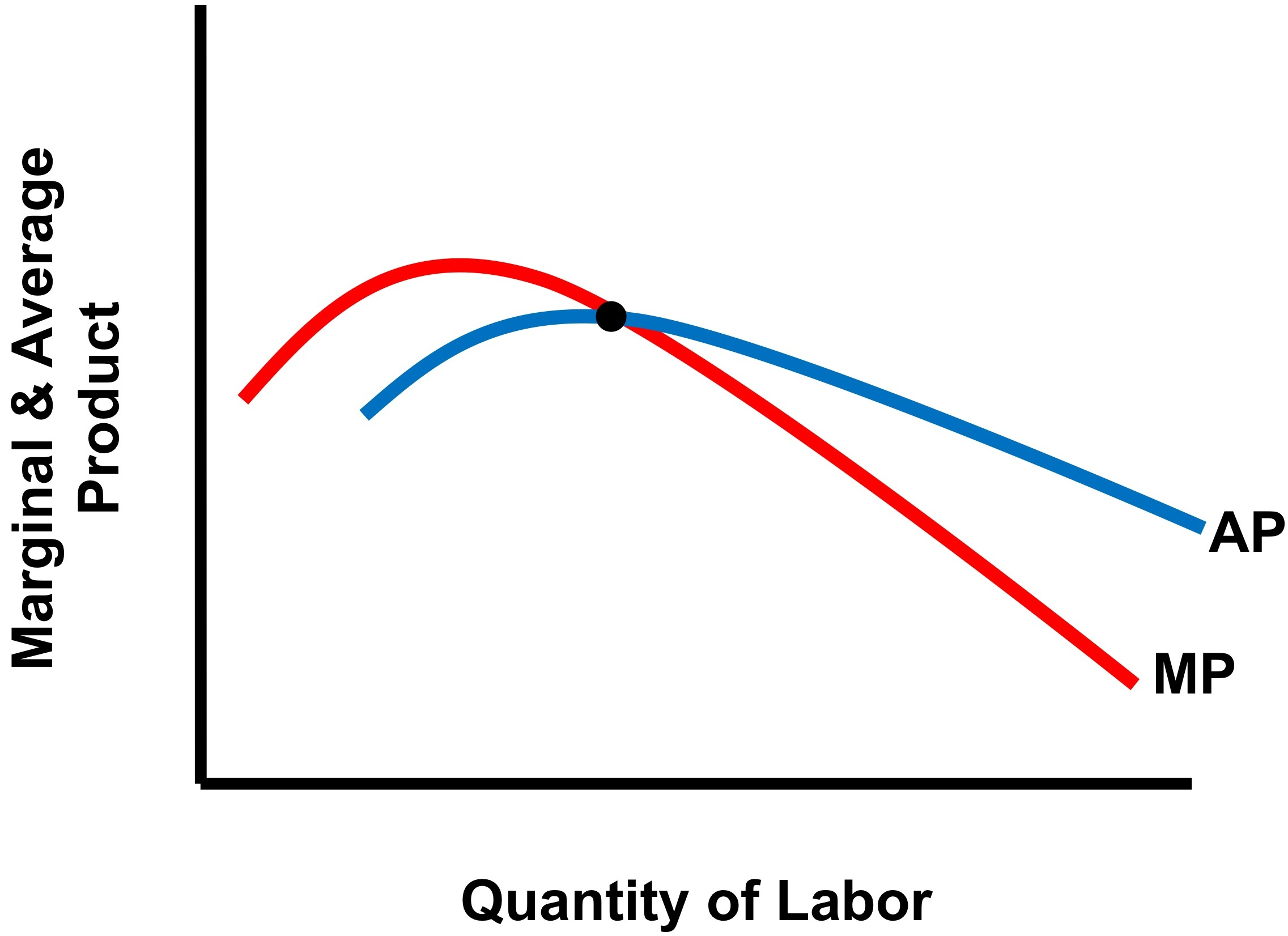 What is the relationship between average product and marginal what is the relationship between average product and marginal product no bull economics lessons pooptronica